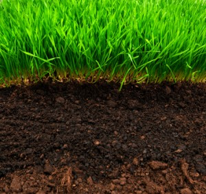 Lee County Fertilizing