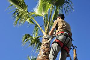 Estero Landscaping Contractor Tips