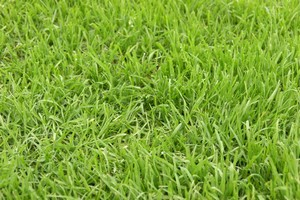 Lawn Fertilization Southwest FL