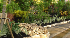 Southwest Florida Landscaping